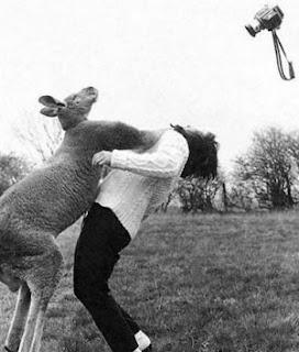 Kanguru detesta fotografias