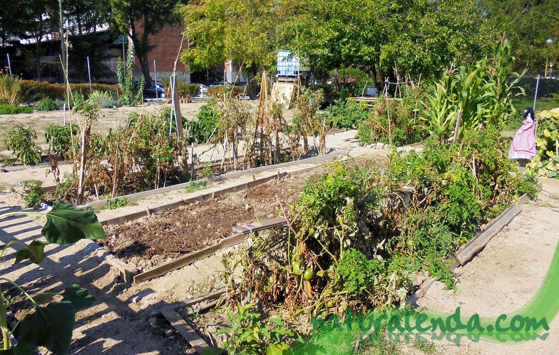 Las hortalizas y verduras