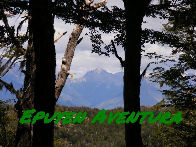 Bosque nativo patagónico - Patagonia Andina