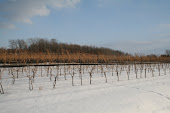 Winter Vines at GreenLane