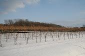 Winter Vines at GreenLane