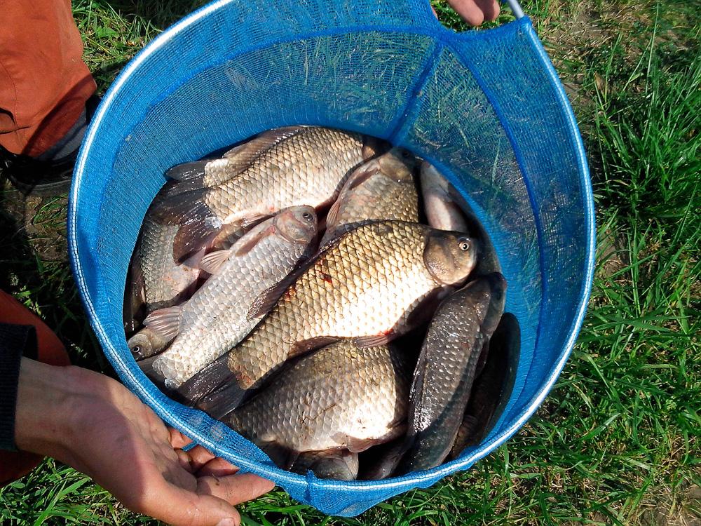 рыбалка в липецкий район