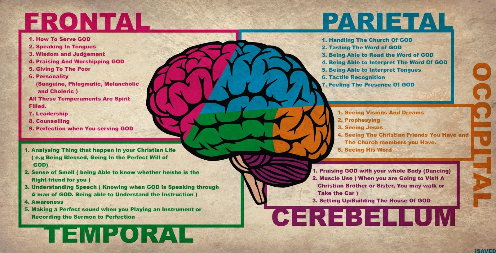 Brain Jack Image: Brain Anatomy