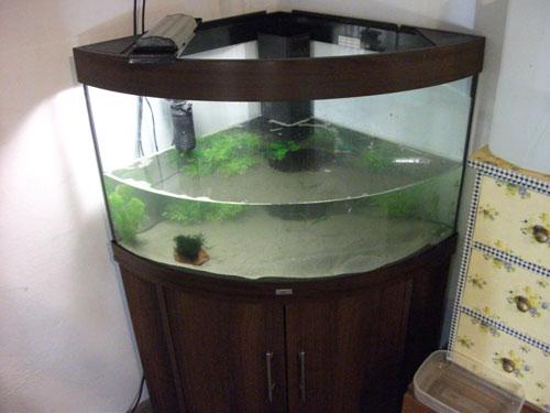 Acquarilowcost ed ora che sei nel mio garage a noi due for Acquisto acquario usato