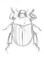 christmas beetle sketch