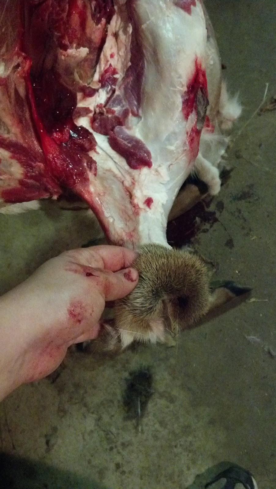 how to cut legs off deer