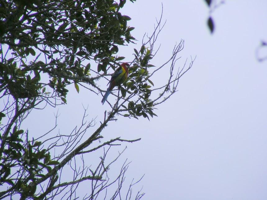 parrot-nz