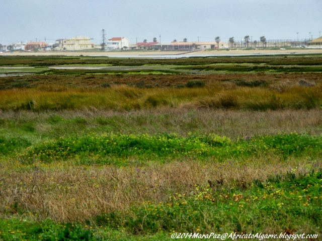 Vegetation on the banks of Ria Formosa, Faro