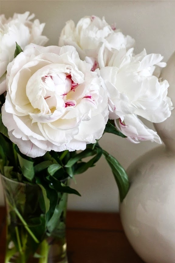 pretty white peonies in vase