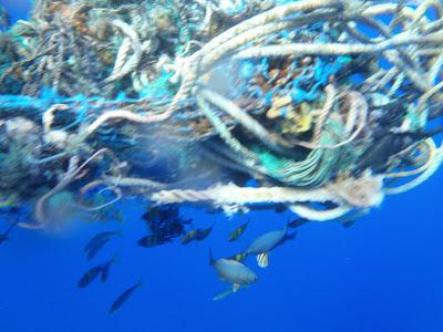 各式各樣的魚類躲在魚網下,一不小心可能也會命喪於此