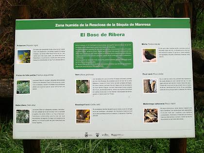 Plafó informatiu sobre el Bosc de Ribera