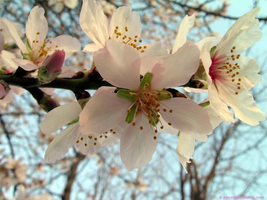 Fotos de flores y rosas para fondo de pantalla del celular