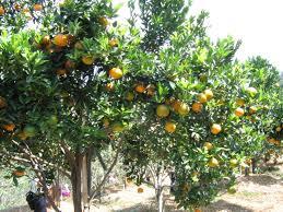 Raising Orange