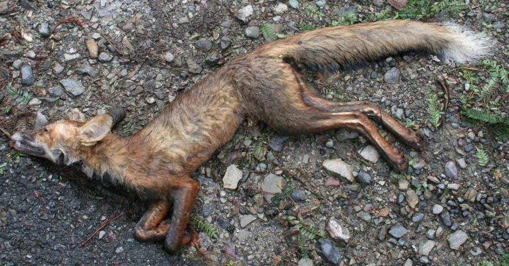 Do Cats Eat Dead Bodies