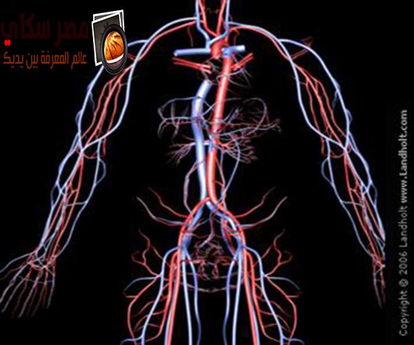 الدورة الدموية وماهى خطواتها  Blood circulation