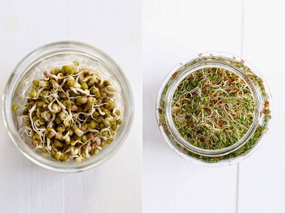 Two glass jars of sprouted seeds