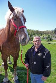 world's tallest living horse