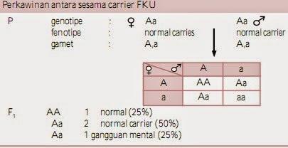Perkawinan antara sesama carrier FKU