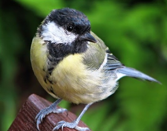 Burung Pemakan Otak