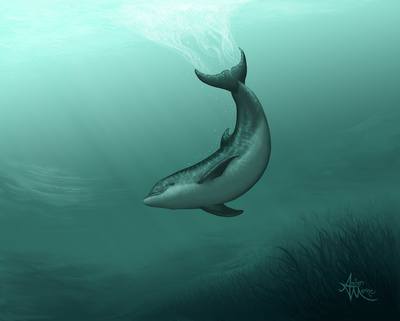 Orca Creative Group 86