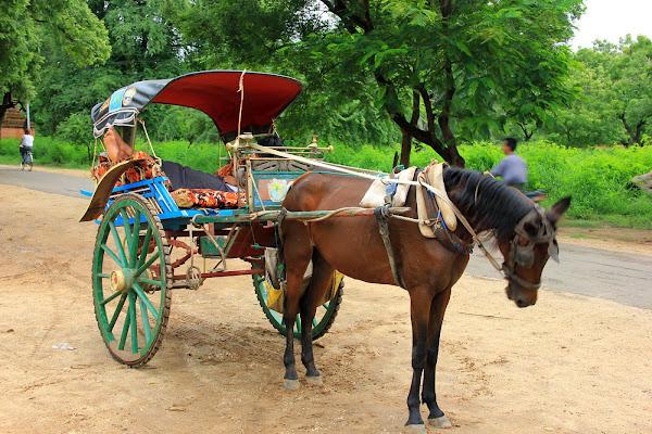 Carro tirado por caballos en el antiguo Bagan