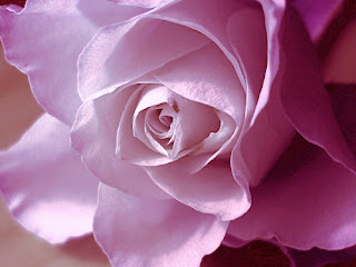 صور ورود صور ورد احلى صور الورود