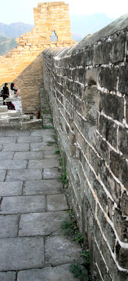 plants in cracks in the Great Wall