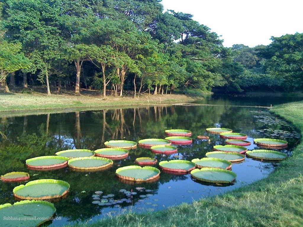 top 10 beautiful gardens of india fabulous