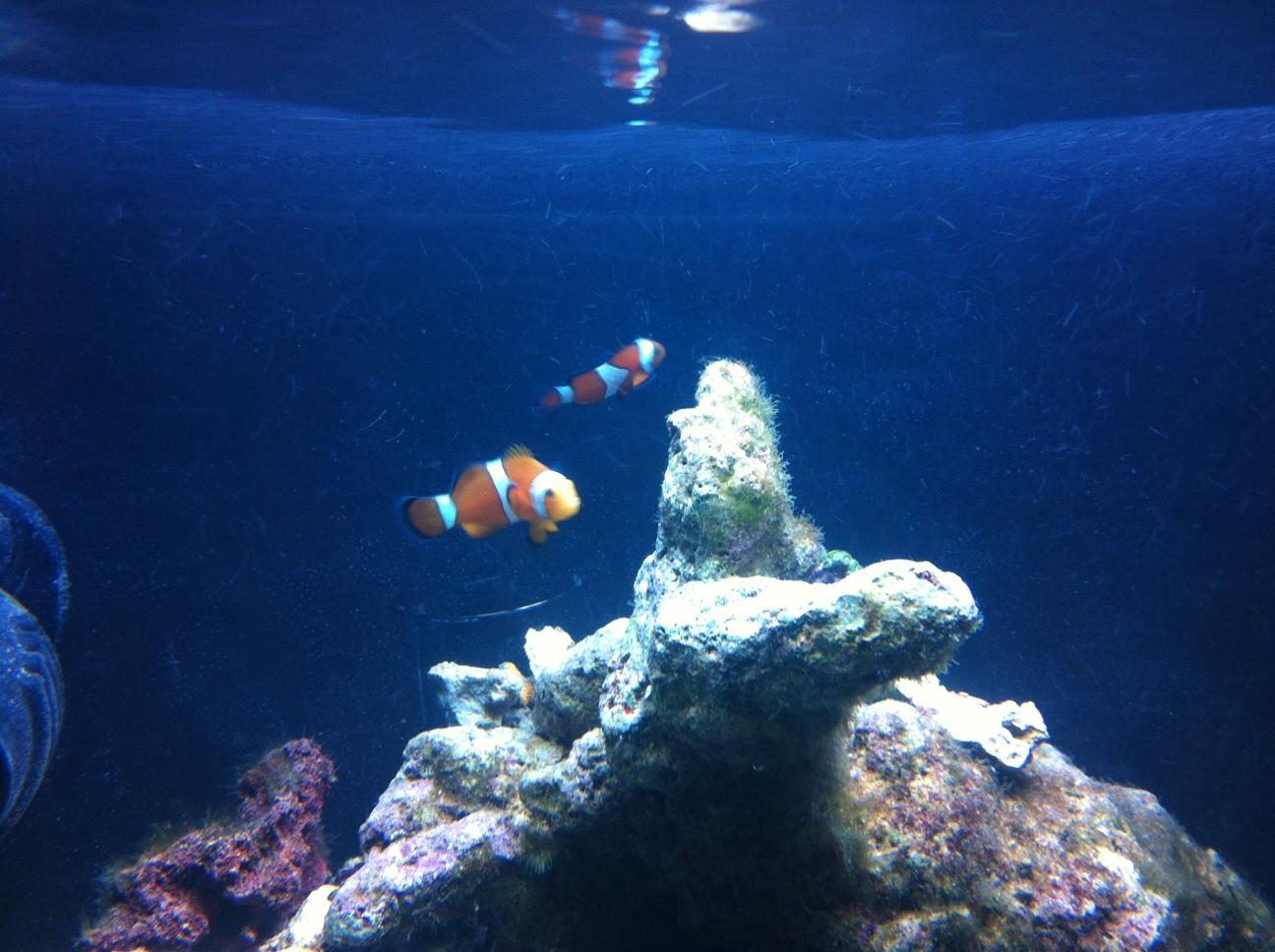 Primeros peces en el acuario de arrecife marino el blog for Piscina de peces