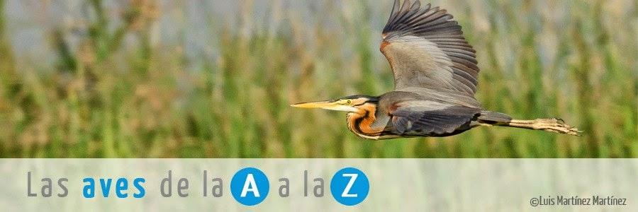 http://www.seo.org/listado-aves/