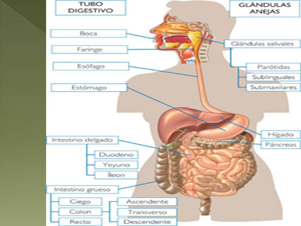MEDICOQUIRURGICALEY I: MEDICOQUIRURGICOLEY: UNIDAD V DETERMINAR LA ...