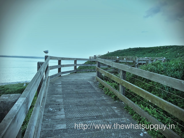Phillip Island Wooden Walk