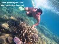 terumbu karang di karimun jawa