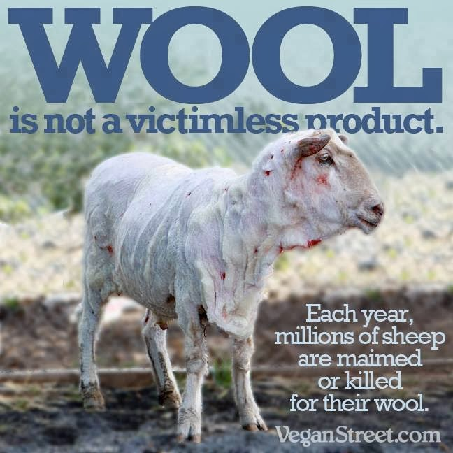 NO Wool... I do NOT advocate the use of Wool!!