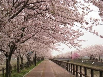 Islam, Negeri Sakura, Japan, Jepang