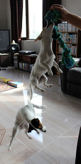 Two flying dogs