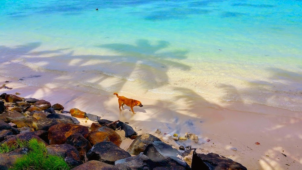 A spasso tra i colori  della Muri Lagoon - foto di Elisa Chisana Hoshi