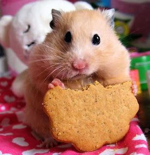 Tips Merawat Hamster yang Baik dan Benar