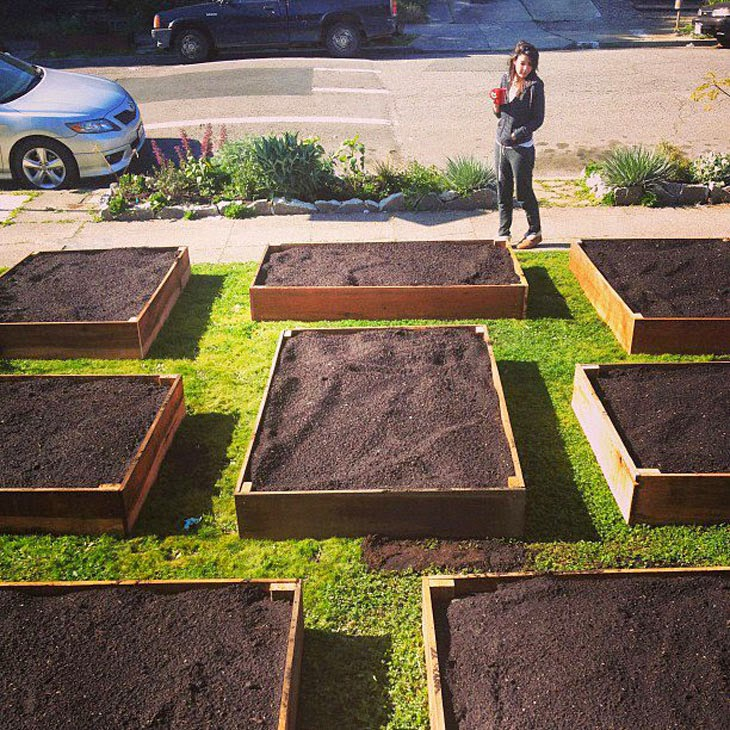 Since the city was giving away compost for free, he got some and that's what you see in the boxes. - He Started With Some Boxes, 60 Days Later, The Neighbors Could Not Believe What He Built