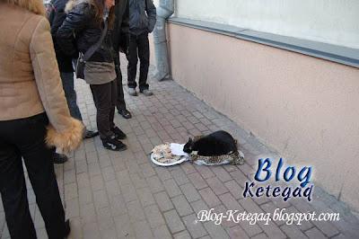 Kucing menjadi pengemis di Rusia