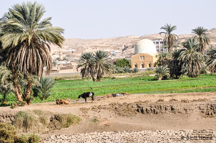 Nile Aswan green - Binti Home