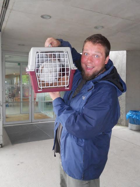 Adopting a pet in Berlin