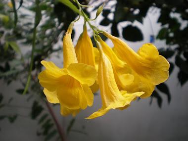 Delicadas Flores Amarelas