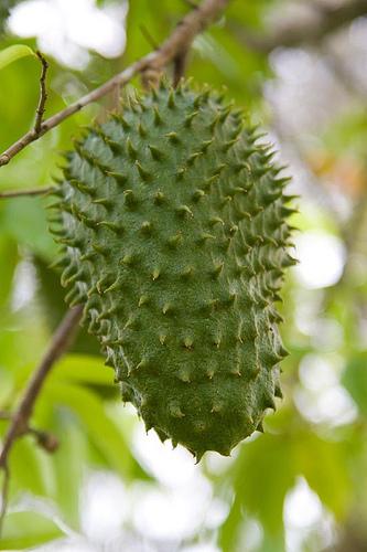 are peas a fruit spiky fruit