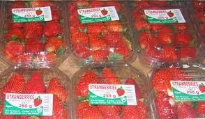 تحميل كتيب إنتاج الفراولة المجهزة للتصدير