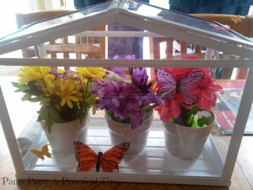 Butterfly House Enclosure