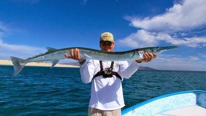 Macam-macam Teknik Mancing,Umpan Jitu Mancing Ikan Cendro,Ikan Cendro, tips memancing ikan air tawar, resep umpan, Mancing ikan cendro,Teknik Mancing,