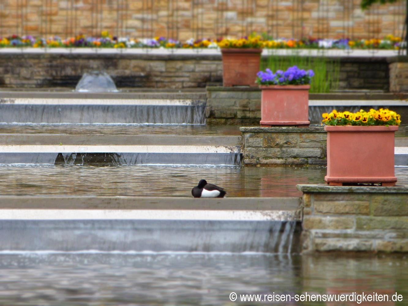Planten un Blomen - Schönster Park in Hamburg, Ente macht Pause