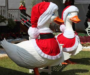 Natal em Pato