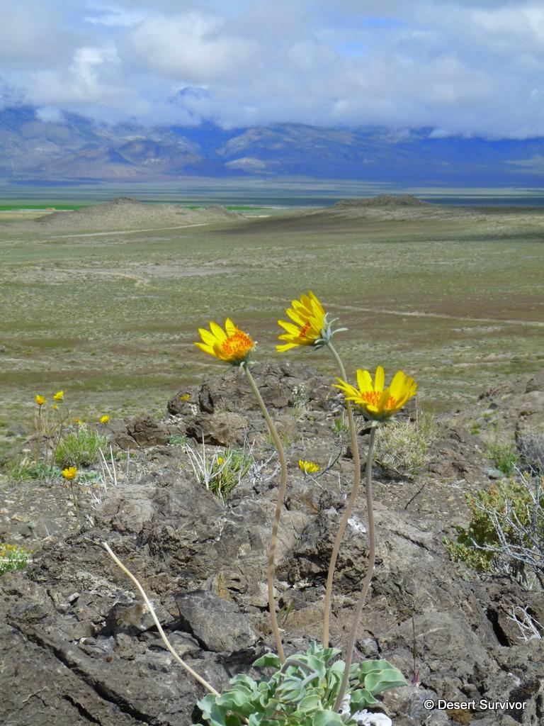 desert survivor desert flowers and an unexpected sight at the end